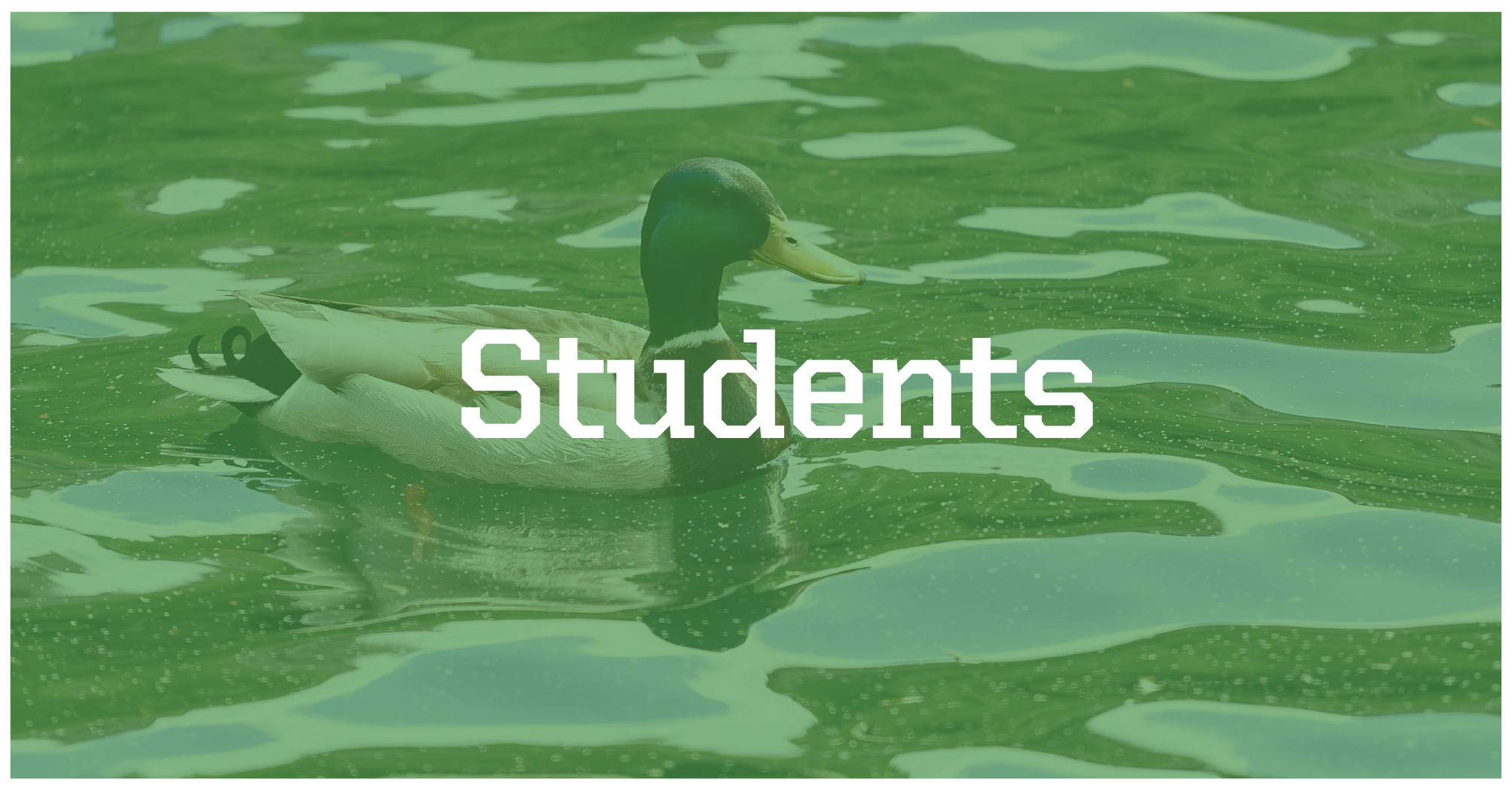 Background image is of duck in post; button